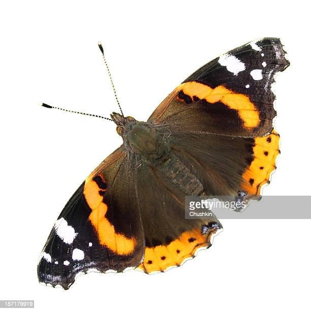 butterfly red admiral - vlinder stockfoto's en -beelden