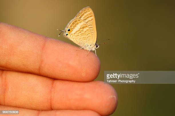 Butterfly resting on human hand