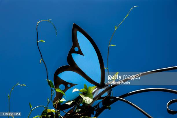 butterfly sign - ulysses butterfly stock pictures, royalty-free photos & images