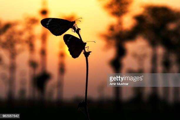 Butterfly sitting on flowers with sunset in the background