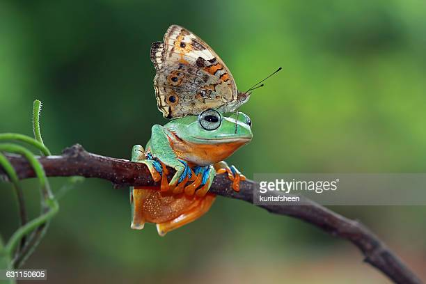 butterfly sitting on tree frog, indonesia - animals in the wild stock pictures, royalty-free photos & images