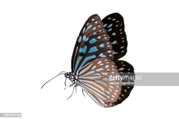 butterfly spots orange yellow white background isolate - schmetterling stock-fotos und bilder