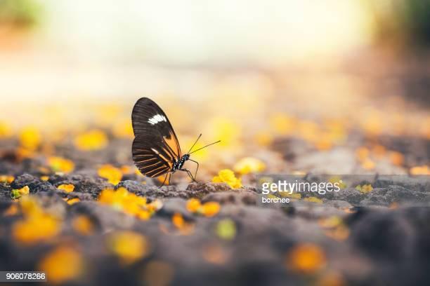 Fjäril Under blommande trädet