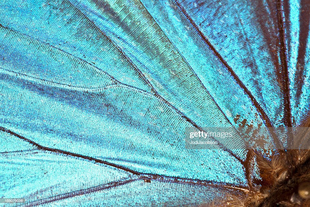 Butterfly wing background : Stock Photo