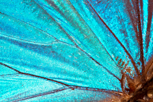 Butterfly wing background 155076036