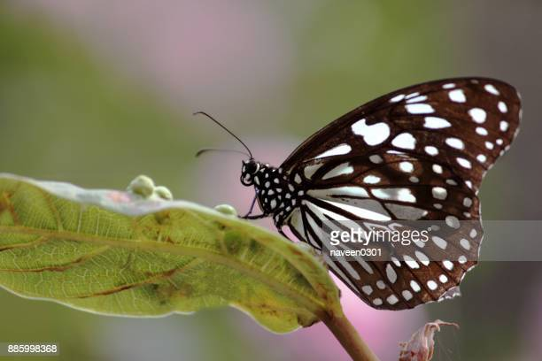 butterfly with blurred natural background - insect stock pictures, royalty-free photos & images