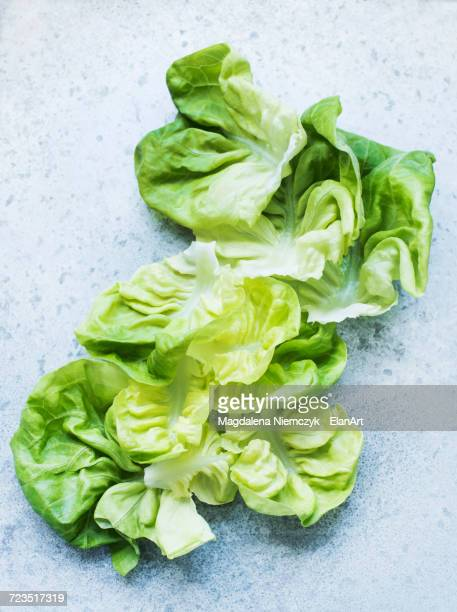 Butterhead lettuce leaves