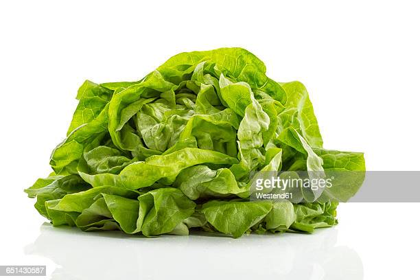 butterhead lettuce - green salad stock pictures, royalty-free photos & images