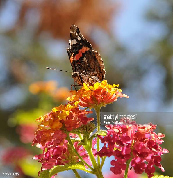 Butterly on colourful flowers