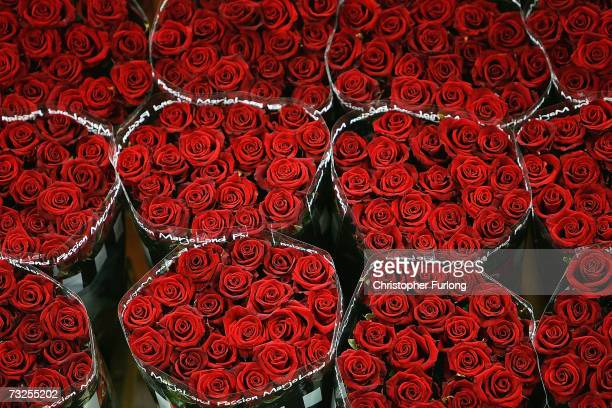 A buyer checks the quality roses waiting to be auctioned at Aalsmeer Flower auction in the run up to Valentines Day on February 8 2007 in Aalsmeer...