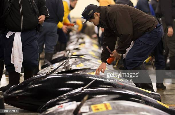 A buyer inspects fresh bluefin tuna prior to the year's first auction at Tsukiji Market on January 5 2017 in Tokyo Japan Kiyomura Co bid the highest...