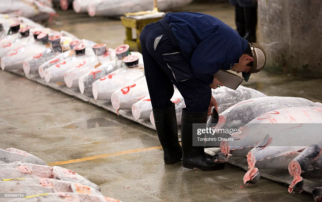 A buyer inspects frozen tuna prior to the year's first auction at Tsukiji Market on January 5, 2017 in Tokyo, Japan. Kiyomura Co. bid the highest priced tuna weighing 212 kilogram (467.38 pound) for 74.2 million yen ($637,155) at the year's first auction.