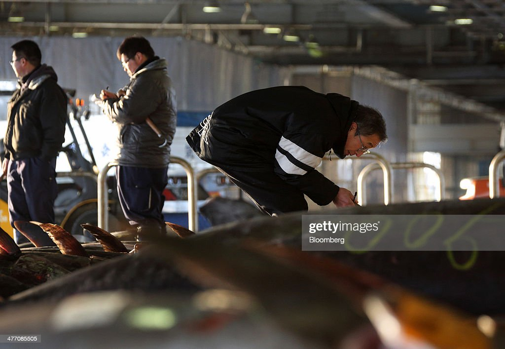 A buyer inspects the quality of billfish meat ahead of an auction at the fish market in Kesennuma City, Miyagi Prefecture, on Friday, March 7, 2014. Reconstruction of Tohoku, the northern Japan region devastated by the March 11, 2011 earthquake and tsunami, continues as the third anniversary of the disaster approaches. Photographer: Tomohiro Ohsumi/Bloomberg via Getty Images