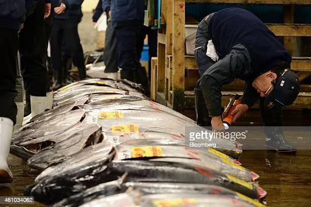 Tsukiji Fish Market Stock Photos and Pictures  