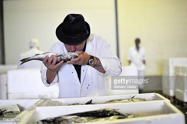 A buyer smells a fish at Grimsby Fish Auction on June 15 2011 in Grimsby England Grimsby Fish Market is recognised as being one of the most important...