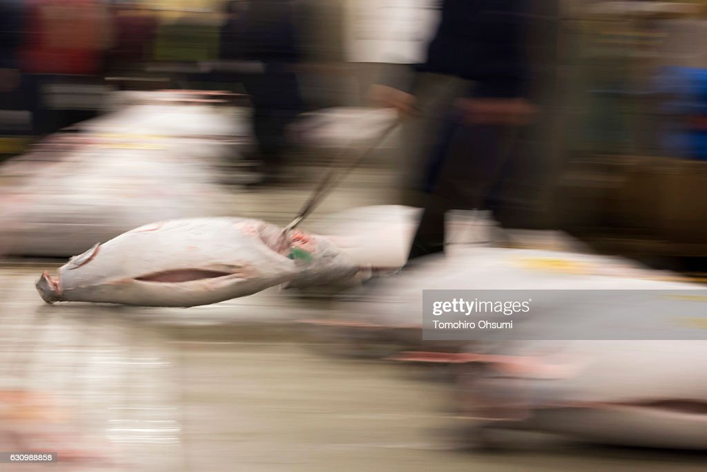 A buyer transports frozen tuna after the year's first auction at Tsukiji Market on January 5, 2017 in Tokyo, Japan. Kiyomura Co. bid the highest priced tuna weighing 212 kilogram (467.38 pound) for 74.2 million yen ($637,155) at the year's first auction.