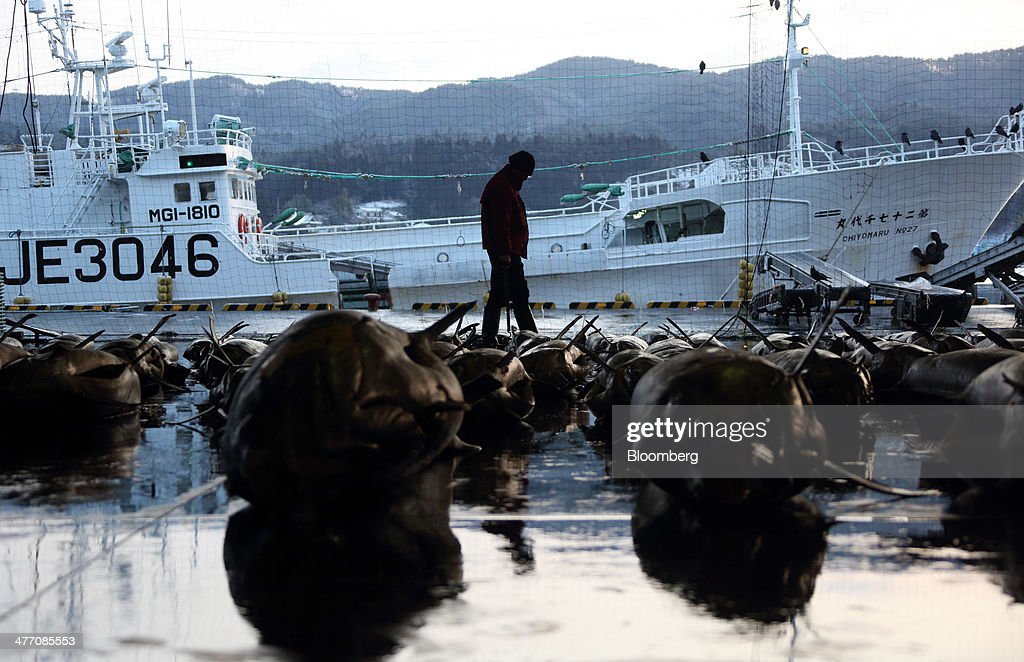 A buyer walks near billfish ahead of an auction at the fish market in Kesennuma City, Miyagi Prefecture, on Friday, March 7, 2014. Reconstruction of Tohoku, the northern Japan region devastated by the March 11, 2011 earthquake and tsunami, continues as the third anniversary of the disaster approaches. Photographer: Tomohiro Ohsumi/Bloomberg via Getty Images