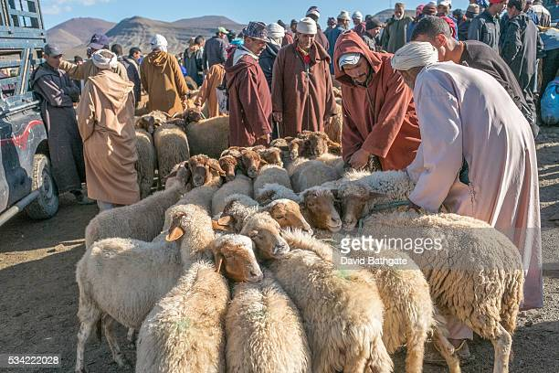 Buyers and sellers of sheep at the Imilchil Morocco livestock market that accompanies the village's marriage and betrothal festival