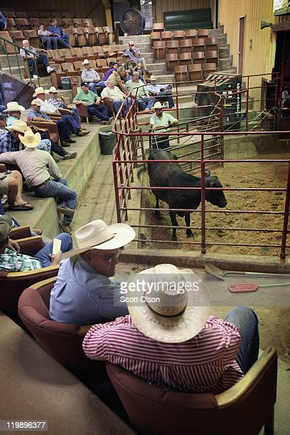 Buyers and sellers watch as cattle go up for auction at the Abilene Livestock Auction July 26 2011 in Abilene Texas A severe drought in the region...