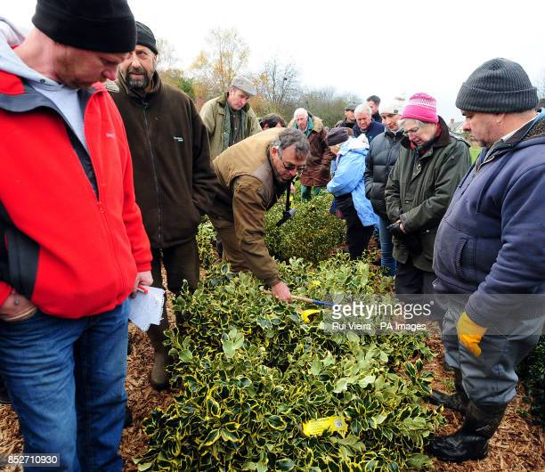 Buyers during the auction sale of holly mistletoe wreaths and Christmas trees at Bromyard Road Business Park Tenbury Wells Worcestershire