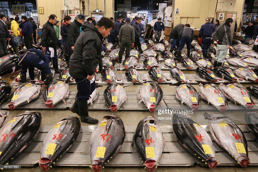 First Auction For 2015 Held At Tsukiji Fish Market : ニュース写真