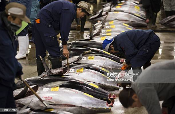 Buyers inspect fresh bluefin tuna prior to the year's first auction at Tsukiji Market on January 5 2017 in Tokyo Japan Kiyomura Co bid the highest...