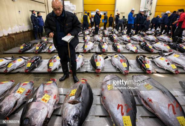 Buyers inspect fresh bluefin tuna prior to the year's first auction at Tsukiji Market on January 5 2018 in Tokyo Japan Yamayuki Group bid the highest...