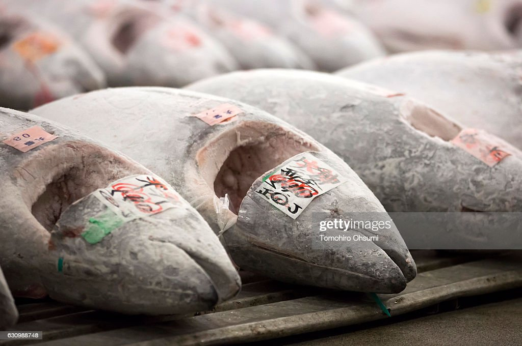 Buyers inspect frozen tuna prior to the year's first auction at Tsukiji Market on January 5, 2017 in Tokyo, Japan. Kiyomura Co. bid the highest priced tuna weighing 212 kilogram (467.38 pound) for 74.2 million yen ($637,155) at the year's first auction.