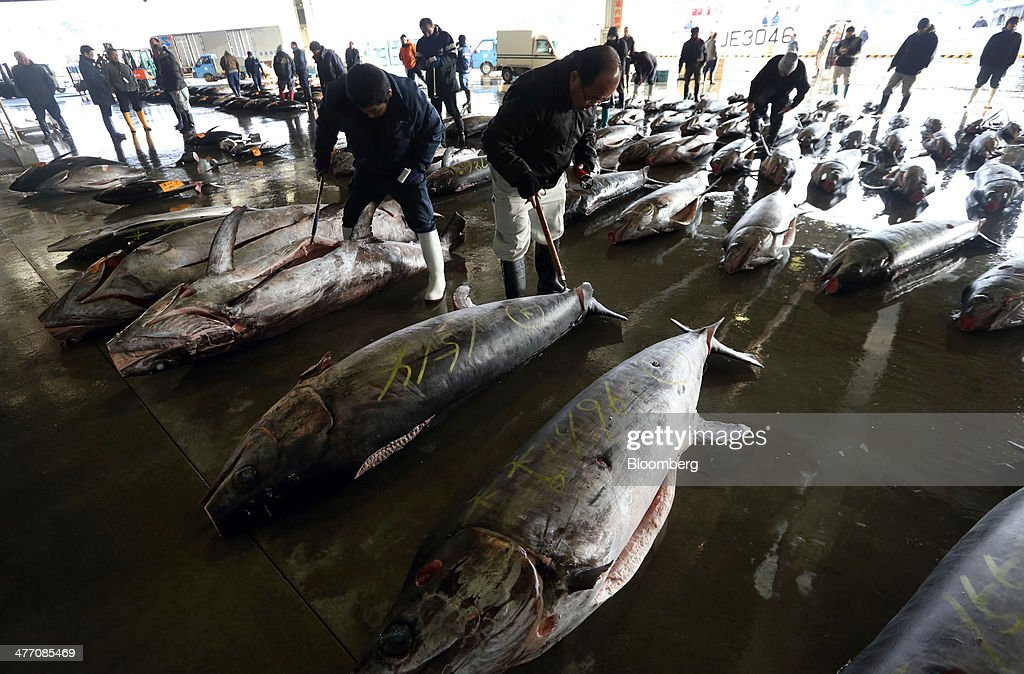 Buyers inspect the quality of billfish meat ahead of an auction at the fish market in Kesennuma City, Miyagi Prefecture, on Friday, March 7, 2014. Reconstruction of Tohoku, the northern Japan region devastated by the March 11, 2011 earthquake and tsunami, continues as the third anniversary of the disaster approaches. Photographer: Tomohiro Ohsumi/Bloomberg via Getty Images
