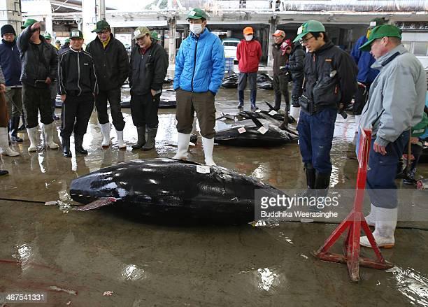Buyers stand next to 301 kilograms weight fessh Bluefin tuna at Kiikatuura fresh tuna market on February 7 2014 in Nachikatsuura Japan Kiikatsuura...