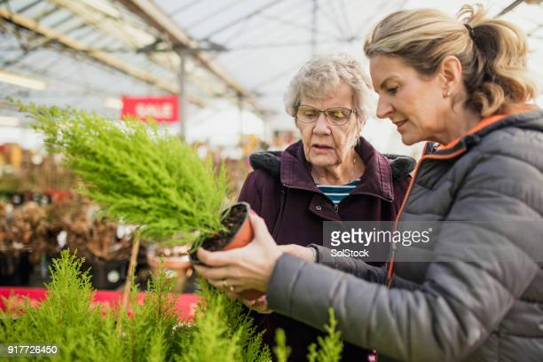 buying plants in a garden centre - british granny stock photos and pictures