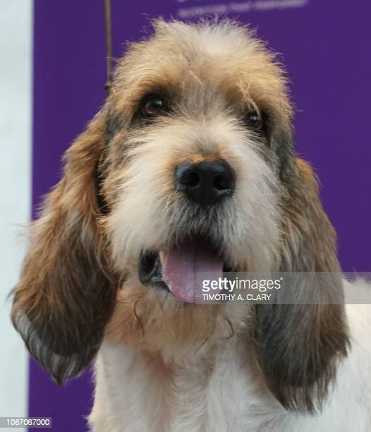 Meet The Breeds Pictures and Photos - Getty Images