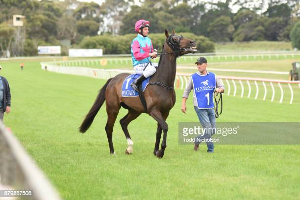 Buzz Punch ridden by Brad Rawiller goes out for the CoggerGurry Chartered Accountants BM58 Handicap at Hamilton Racecourse on November 27 2017 in...