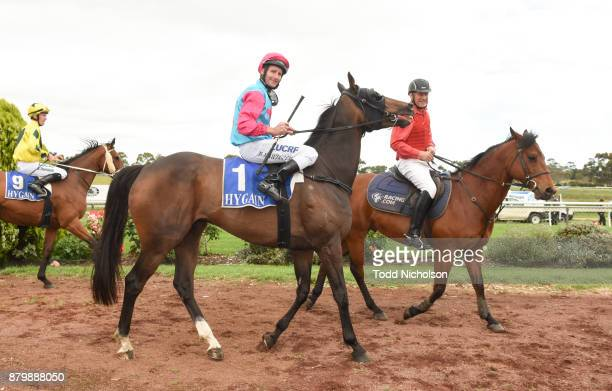 Buzz Punch ridden by Brad Rawiller returns after the CoggerGurry Chartered Accountants BM58 Handicap at Hamilton Racecourse on November 27 2017 in...