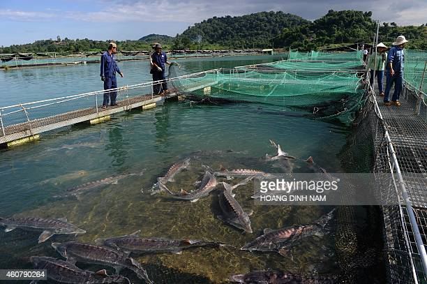 AQUACULTURE by CAT In this picture taken on December 9 workers walk next to fish cages at a sturgeon farm at the Da Mi hydroelectric resovoir lake in...