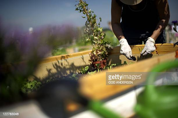 By DEBORAH COLE - A woman works in her flower bed between the runways at legendary Tempelhof Airport, the site of the Berlin Airlift and now home to...
