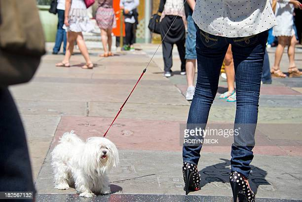 STORY by Fabienne Faur LifestylefoodUShealthteenagers A woman and her dog walk on Hollywood Boulevard in Hollywood California on September 17 2013...