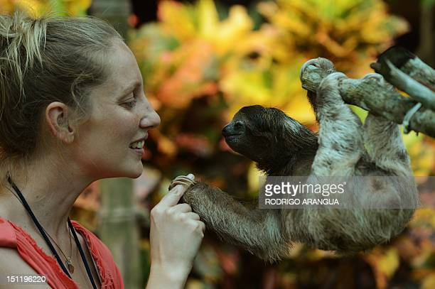 STORY by Isabel Sanchez A volunteer at the Sloth Sanctuary plays with a brownthroated sloth at the sanctuary in Penshurt some 220 km east of San Jose...