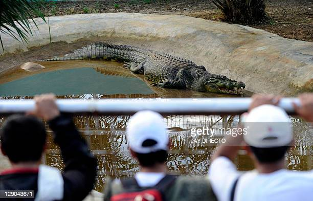 CROCODILE FEATURE by Jason Gutierrez In this photo taken on September 21 residents from nearby towns watch Lolong a onetonne 21foot crocodile...
