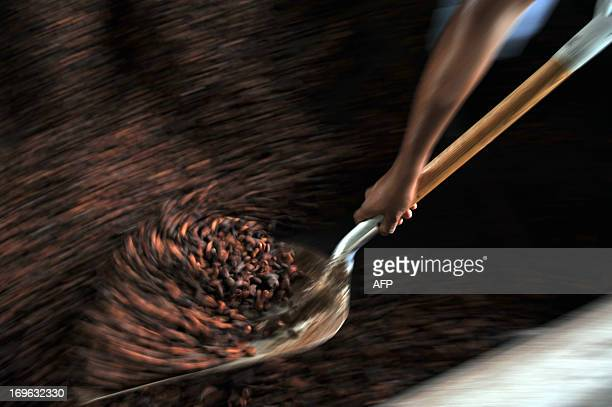 STORY by Marianela Jimenez A man moves cocoa beans with a shovel during the drying process at the Association of Small Producers of Talamanca one of...