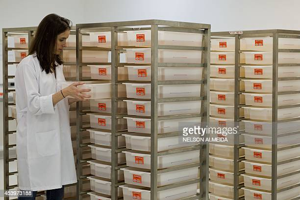 STORY by Natalia Ramos The production supervisor of biotech company Oxitec Sofia Bastos Pinto looks at larvae of transgenic Aedes aegypti mosquitos...