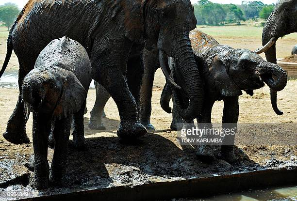 By Otto Bakano This photo made on February 10 2011 shows an elephant family at a waterhole in Tsavo west national park some 350 kilometres southeast...