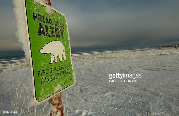 STORY by Paul Richards Canadaclimatewarmingwildlifepolarbears One of many polar bear alert warning signs posted inside the town of Churchill Manitoba...