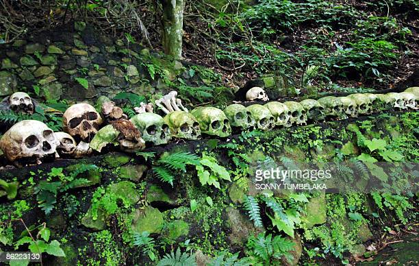 STORY INDONESIABALICULTUREDEATH by Presi Mandari Skulls are placed at a grave of a banyan tree at Trunyan village in Bangli on the resort island of...