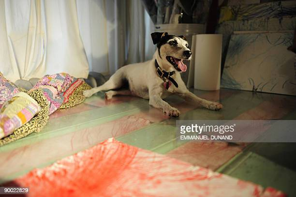 STORY by Sebastian Smith Lifestyleanimalartoffbeat Tillamook Cheddar or Tillie a Jack Russell terrier lies next to one of her creations after working...