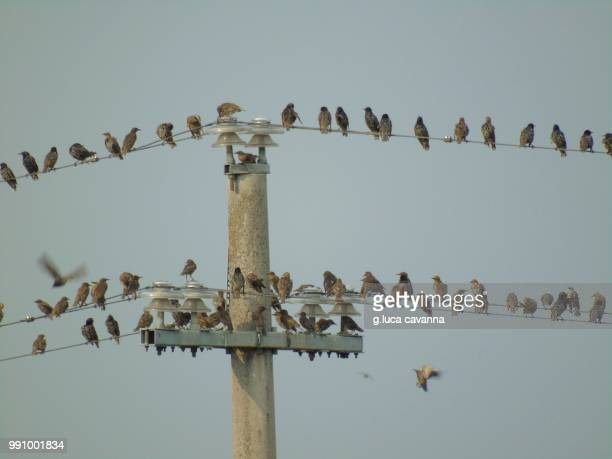 byrds evening pole party - birdhouse stock pictures, royalty-free photos & images