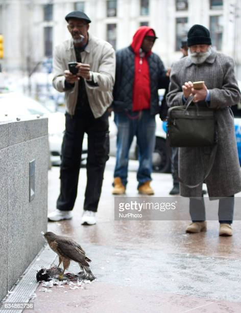 Bystanders watch as a hawk preys on a dead pigeon on a Center City Philadelphia PA on February 11 2017