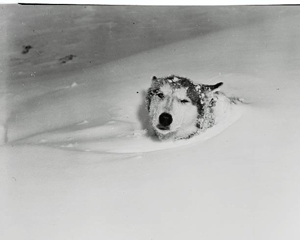 UNS: Bettmann Moments-Fun In The Snow