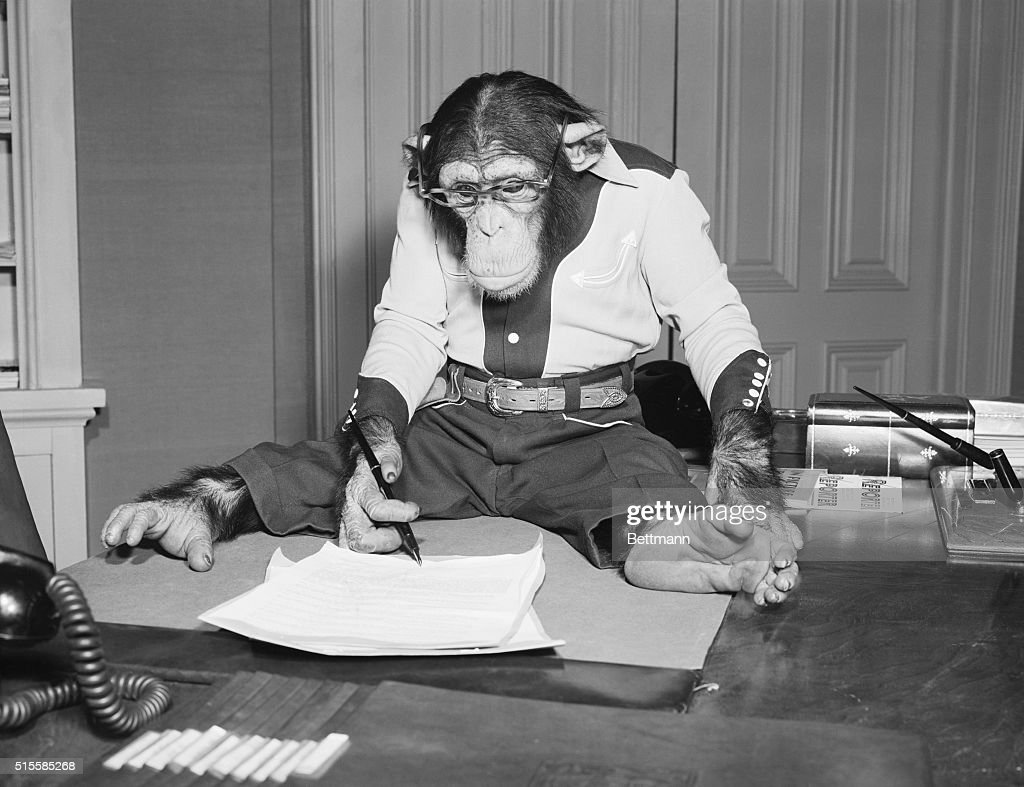 Ca. 1950- Hollywood had its share of monkey business today when Bonzo, a five-year-old chimpanzee, took pen in paw and scratched his mark on a seven year acting ticket at Universal-International. Producer Michael Kraike looks on .
