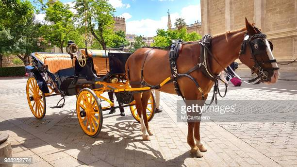 caballo - carriage stock pictures, royalty-free photos & images